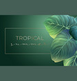 summer banner with green palm leaves vector image vector image