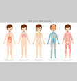 male human anatomy body systems vector image