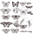 collection of hand drawn butterflies vector image