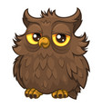 old wise fluffy owl brown color vector image vector image