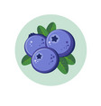 blueberry berries in green circle vector image