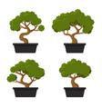 bonsai tree icon set vector image vector image