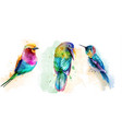 colorful tropic birds watercolor beautiful vector image vector image