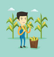 farmer collecting corn vector image vector image