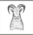 hand drawn head mutton vector image vector image