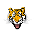 Tiger anger of a tiger head vector image vector image
