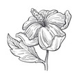 wild rose flower or hibiscus plant isolated sketch vector image vector image