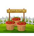 basket of apples in garden vector image