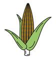 corn cob isolated icon vector image vector image