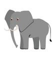 elephant wild animal vector image