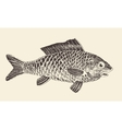 Fish Bream vintage engraved vector image