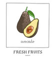 hand drawn of isolated avocado vector image