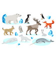 set polar animals icons isolated on white vector image