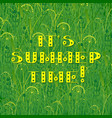 background of grass text - its summer time vector image