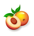 cut and whole peaches with leaves on white vector image