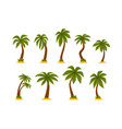 flat set cartoon tropical palms high vector image vector image