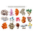 magic mushrooms set vector image vector image