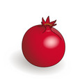 single fresh ripe pomegranate vector image vector image