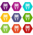tooth cross section icon set color hexahedron vector image vector image