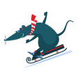 cartoon rat or mouse rides on sledge vector image vector image