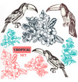 collection of three toucan bird fully hand drawn vector image vector image