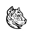 head a spanish bulldog or spanish alano mascot vector image vector image
