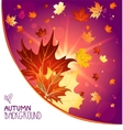 Autumn decoration with maple leaves vector image vector image