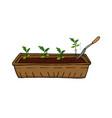 growing seedlings vegetables and flowers vector image vector image