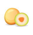 juicy melon isolated on white background vector image