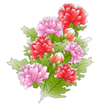 bunch a peonies and green leafs vector image vector image