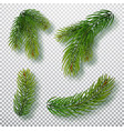 christmas tree branches set for a decor vector image vector image