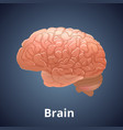 realistic human brain isolated on dark gray vector image