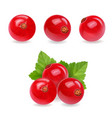 red currant realistic of berries vector image vector image