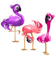 three funny flamingo isolated on white background vector image