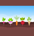 vegetable garden with funny root-crops vector image