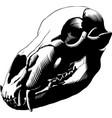 bear skull black vector image vector image