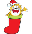 Cartoon cat inside a Christmas stocking vector image vector image