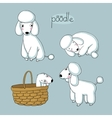 set cute poodle in different poses vector image