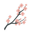 sakura branch spring cherry blossom isolated vector image