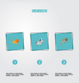 set of alive icons flat style symbols with donkey vector image