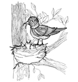 Coloring page with birds vector image vector image