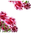Floral Bouquet Carnation Greeting Card vector image vector image