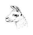 llama head big black eyes cute ink pen sketch vector image