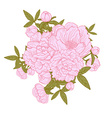 peony floral bouquets vector image