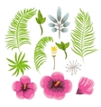 Set of exotic tropical flowers and palm leaves vector image