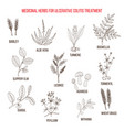 best medicinal herbs to treat ulcerative colitis vector image vector image
