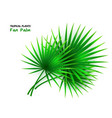 isolated realistic fan palm vector image vector image