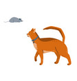 an abyssinian cat watches grey mouse vector image vector image