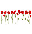 collection of bright blooming red poppy flowers vector image vector image