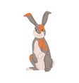 cute rabbit harlequin breed with multicolor